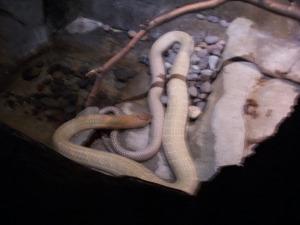 Giant/nasty snake.